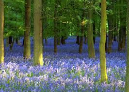 trees and lavender