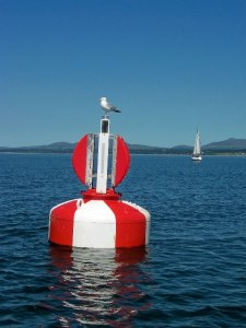 buoy and bird on water